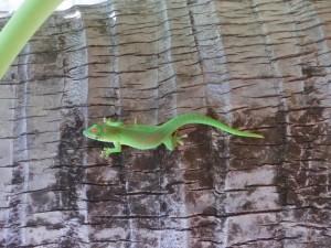 Un autre gecko