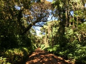 La jungle (1)